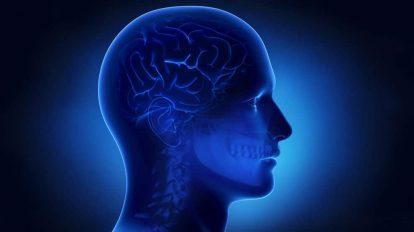 موشن گرافیک علمی بخشهای مغز انسان