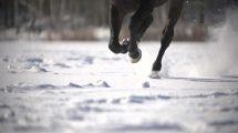 فوتیج اسلوموشن کلوزاپ دویدن اسب در برف زمستان