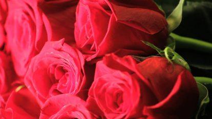 فوتیج کلوزاپ چرخشی از سبد گلهای رز قرمز