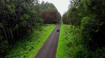 فوتیج هوایی از حرکت ماشین روی جاده جنگلی