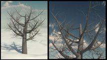 مدل سه بعدی درخت بیبرگ نارون قرمز Dead Elm Tree