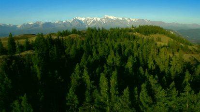 فوتیج هوایی پرواز روی تپهها و دره جنگلی