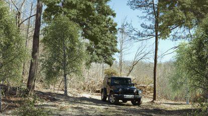 آموزش کامپوزیت جلوه های ویژه شاخ و برگ و درخت در افترافکت