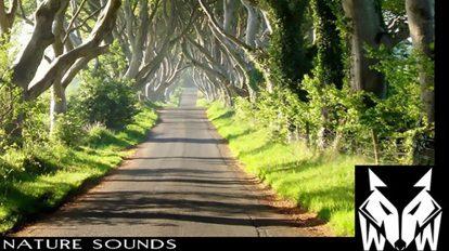 مجموعه افکت صوتی طبیعت West Wolf Nature Sounds