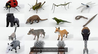مجموعه 30 مدل سه بعدی حیوانات جنگل Forest Animals Super Pack