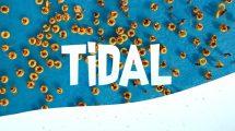 مجموعه ویدیوی موشن گرافیک ترانزیشن Tidal Fun Video Transitions