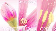 پروژه افترافکت نمایش لوگو با شکوفه زدن گل Flower Bloom
