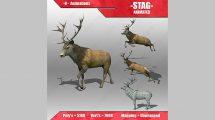 مدل و انیمیشن سه بعدی گوزن Stag Animated