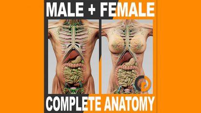 مجموعه مدل سه بعدی آناتومی زن و مرد برای سینمافوردی
