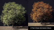 مدل سه بعدی درخت با دو استایل سبز و پاییزی