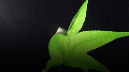 مجموعه مدل سه بعدی اجزای طبیعی RenderGrate Nature