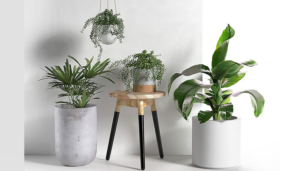 مدل سه بعدی گلدان با گیاه Stool and Pots with Plants