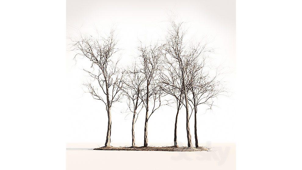 مدل سه بعدی چوب درختان Wood Spring Autumn