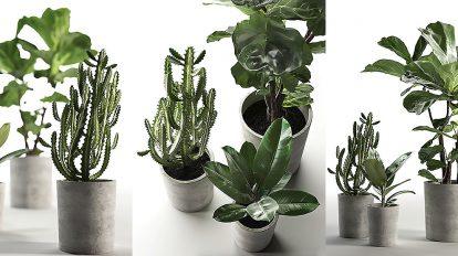 مجموعه مدل سه بعدی گلدان کاکتوس Cactus and Ficus in Pots