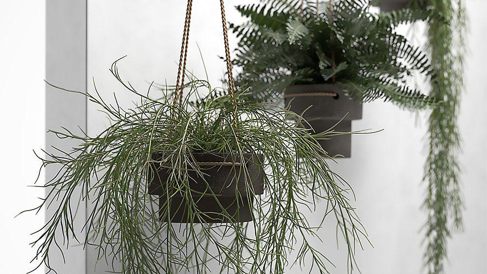 مدل سه بعدی گلدان آویزان گیاهان Hanging Pots with Plants