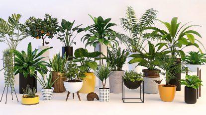 مجموعه مدل سه بعدی گیاهان Plants 3D Model Pack