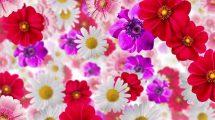 ویدیوی موشن گرافیک زمینه گل دار Flower Background