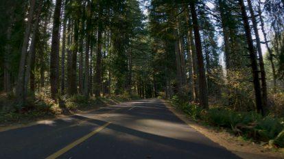 فوتیج اسلوموشن حرکت در جاده جنگلی