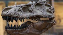 مجموعه تصاویر استخوان و فسیل Fossils and Bones