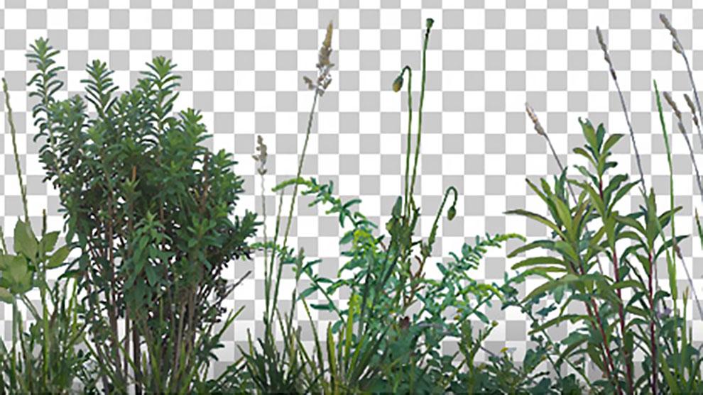 مجموعه تصاویر علف و گیاه Grass and Weeds