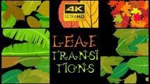 مجموعه فوتیج ترانزیشن کارتونی برگ Leaf Transitions