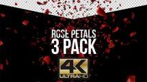 مجموعه فوتیج ریختن گلبرگ Rose Petals Pack 3