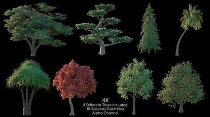 مجموعه فوتیج درخت Tree Pack 4K 2
