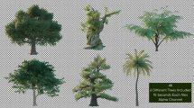 مجموعه فوتیج درخت Tree Pack 4K