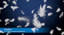 مجموعه فوتیج پوشش پر Feathers Overlays Pack