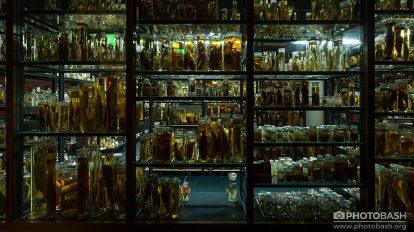 مجموعه تصاویر شیشه محتوی موجودات Jarred Specimens