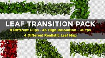 مجموعه فوتیج ترانزیشن برگ Leaf Transition Pack