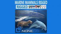 مجموعه مدل سه بعدی پستانداران دریایی Marine Mammals