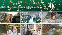 مجموعه فوتیج ترانزیشن پروانه Butterflies Transitions