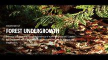 مجموعه مدل سه بعدی اجزای جنگلی Quixel Forest Undergrowth