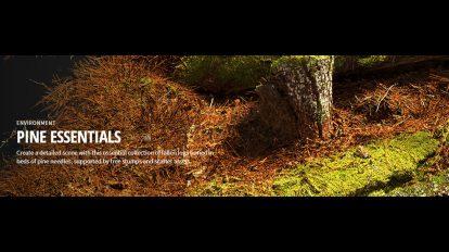 مجموعه تکسچر اجزای درخت کاج Quixel Pine Essentials