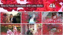 مجموعه فوتیج ترانزیشن با گلبرگ رز Rose and Petals Transition