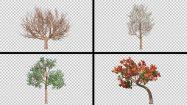 مجموعه فوتیج درختان چهار فصل Four Season Tree Pack