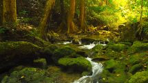 فوتیج رودخانه جاری در طبیعت اعماق جنگل