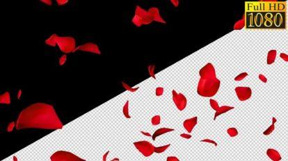 فوتیج ریزش گلبرگ Falling Rose Petals