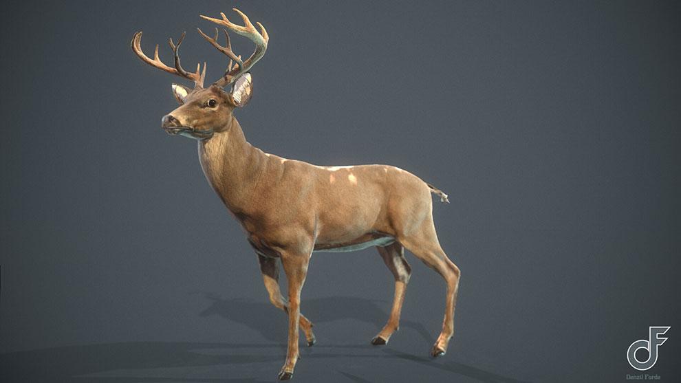 مدل سه بعدی گوزن White Tailed Deer