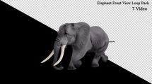 فوتیج موشن گرافیک لوپ حرکت فیل از نمای جلو