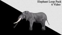 فوتیج موشن گرافیک لوپ حرکت فیل از نمای کنار