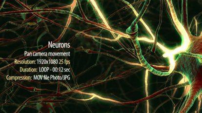 فوتیج موشن گرافیک سیستم عصبی Neurons