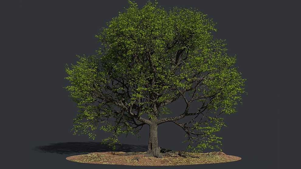 مدل سه بعدی درخت بلوط Oak Summer Tree