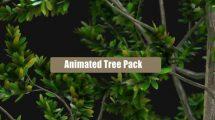پروژه افترافکت مجموعه انیمیشن درخت Animated Tree Pack