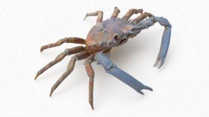 مدل سه بعدی خرچنگ عنکبوتی Spider Crab