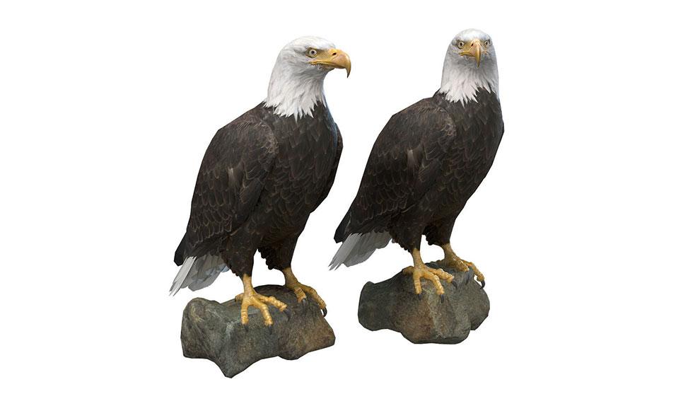 مدل سه بعدی عقاب Bald Eagle