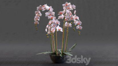 مدل سه بعدی گلدان ارکید Orchid