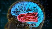 پروژه افترافکت معرفی ساختار مغز Brain Structure