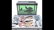 مدل سه بعدی اجزای ماهی فروشی Fish store